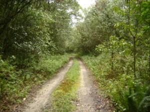 Estrada Ecológica do Guaraguaçu